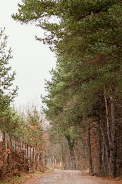 Belle Vue Sur La Forêt à La Lumière Du Jour Photo gratuit