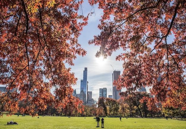 Belle Vue Sur Un Parc Et De Hauts Immeubles Derrière Avec Des Branches D'arbres Au Premier Plan Photo gratuit
