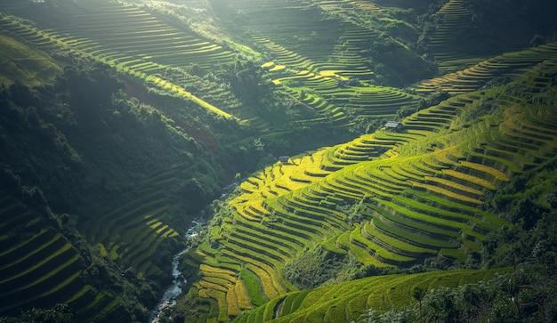 Belle vue sur la terrasse de riz à mu cang chai, vietnam Photo Premium