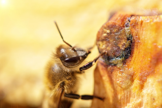 Belles abeilles sur les rayons de miel avec gros plan de miel Photo Premium