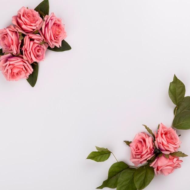 Belles compositions de rose Photo gratuit