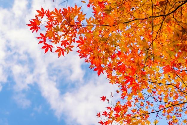 Belles feuilles d'automne colorés Photo gratuit