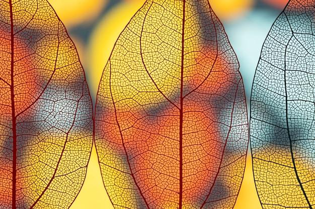 Belles feuilles d'automne transparentes Photo gratuit