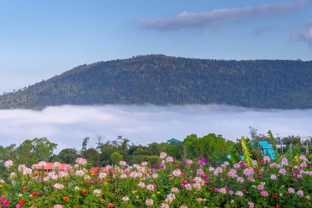 Belles fleurs et brouillard à khao kho, thaïlande Photo Premium