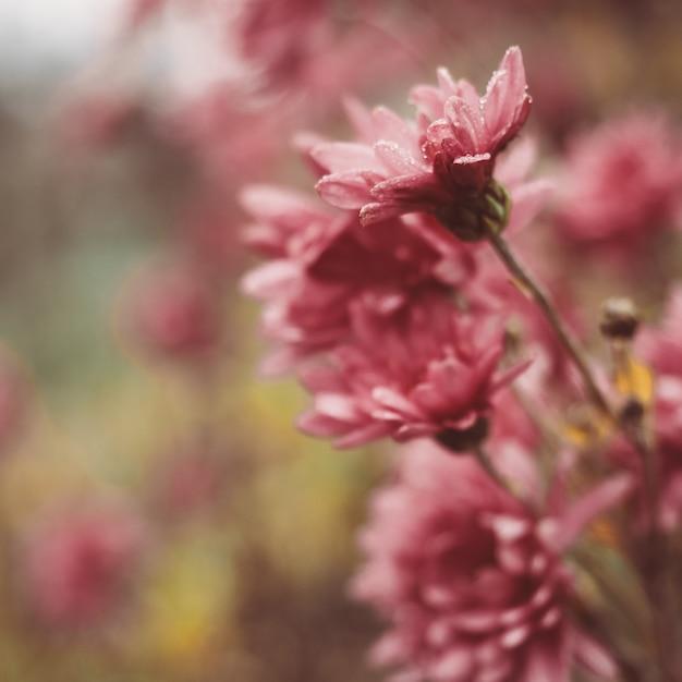 Belles fleurs colorées sur le fond du soleil du matin Photo Premium