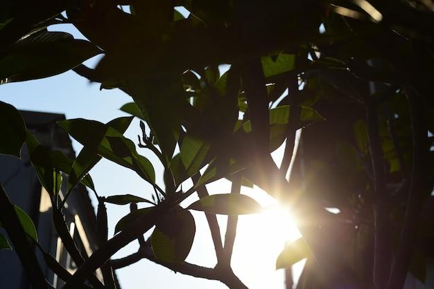 Belles fleurs dans le jardin à côté de la maison. feuilles vertes avec une belle lumière du soleil utilisées comme image de fond. fleurs colorées avec des papillons et des insectes. fleurs colorées dans le parc de la ville Photo Premium