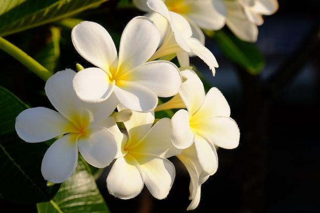 Belles fleurs dans le jardin à côté de la maison. feuilles vertes avec une belle lumière du soleil utilisées comme image de fond. Photo Premium