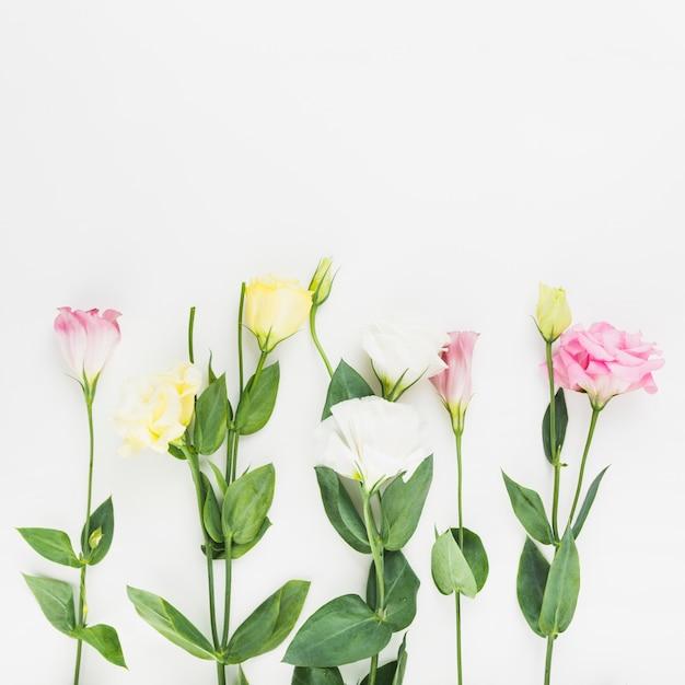 Belles fleurs sur fond blanc Photo gratuit
