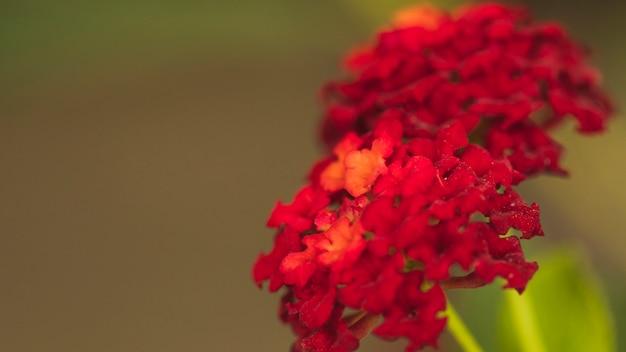 Belles fleurs fraîches vineuses Photo gratuit