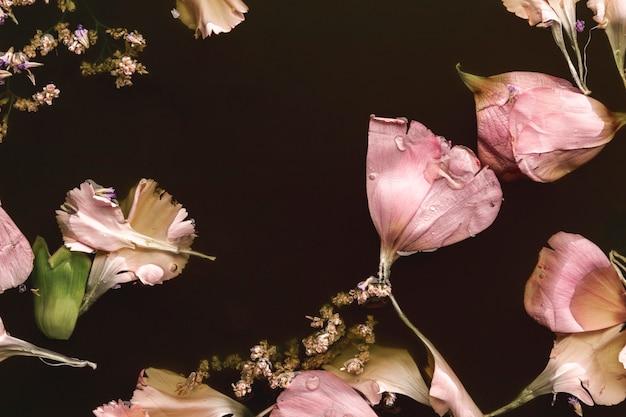 Belles fleurs roses dans l'eau noire Photo gratuit
