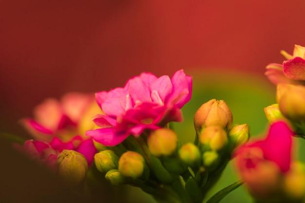 Belles fleurs roses fraîches Photo gratuit