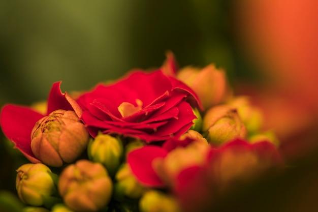 Belles fleurs rouges fraîches Photo gratuit
