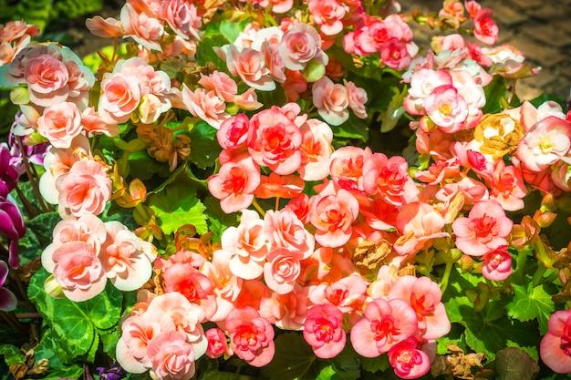 Belles fleurs Photo Premium