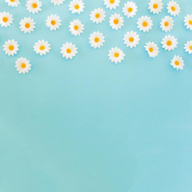 Belles marguerites sur fond bleu avec espace de copie en bas Photo gratuit