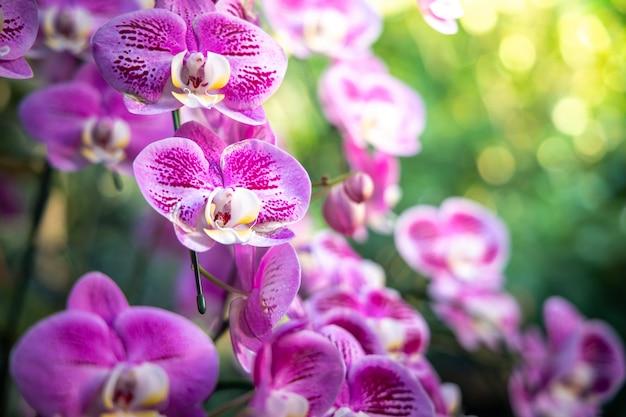 Belles Orchidées En Fleurs Dans La Forêt Photo Premium
