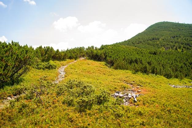 Belles Prairies Vertes Sur Les Montagnes Des Carpates En Ukraine Photo gratuit