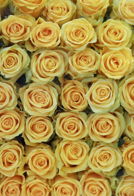 Belles Roses Jaunes Photo gratuit