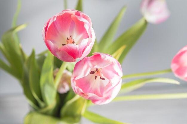 Belles tulipes roses avec des feuilles vertes au printemps Photo Premium