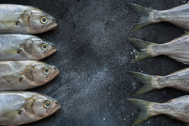 Bluefish de mer noire sur fond noir. motif de poisson avec un espace pour le texte. Photo Premium