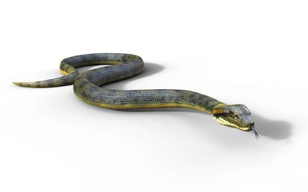 Boa constrictor le plus grand serpent venimeux du monde Photo Premium