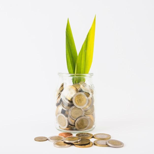 Bocal en verre avec des pièces et des plantes Photo gratuit