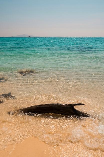 Bois flotté près de la côte de la mer de cristal Photo gratuit