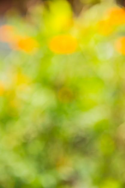 Bokeh abstrait et fond de nature verte floue Photo Premium