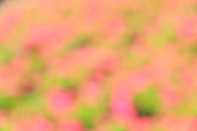 Bokeh abstrait et fond de nature verte floue Photo Premium