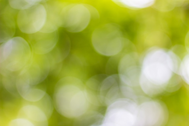 Bokeh naturel Photo Premium
