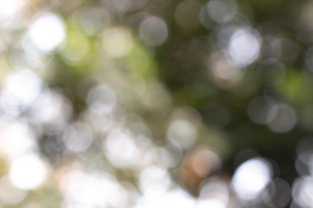Bokeh vert abstrait clair Photo Premium