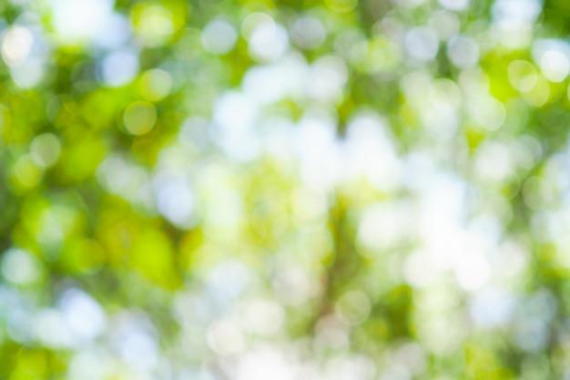 Bokeh vert de l'arbre laisse la nature hors de la mise au point Photo Premium