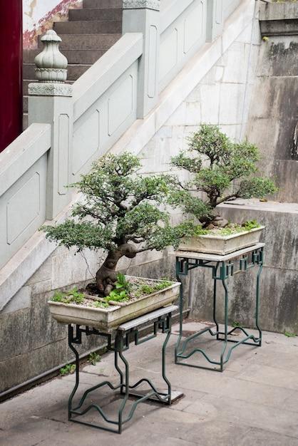 Bonsai arbres Photo gratuit