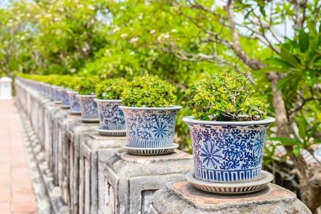 Bonsai, brousse siamoise dans les pots en porcelaine Photo Premium
