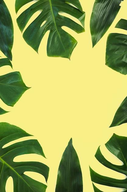 Bordure faite avec des feuilles de monstera sur fond jaune Photo gratuit