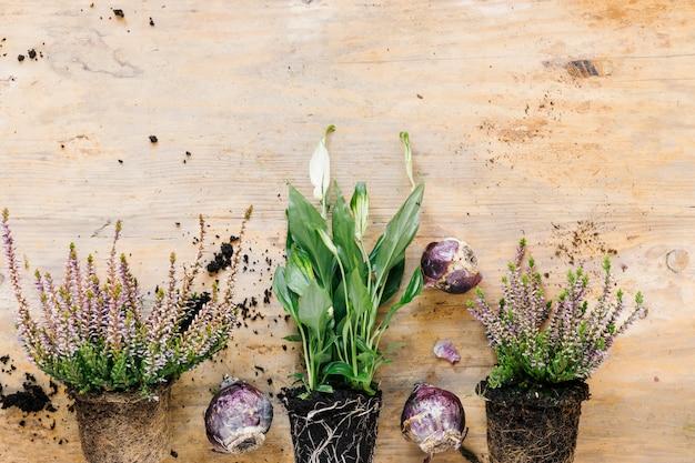 Bordure inférieure d'une plante en pot en croissance et d'une plante à fleurs; oignon disposé sur un bureau en bois Photo gratuit