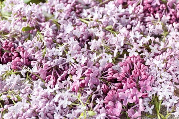 Bouchent le beau fond lilas avec des fleurs violettes et blanches Photo Premium