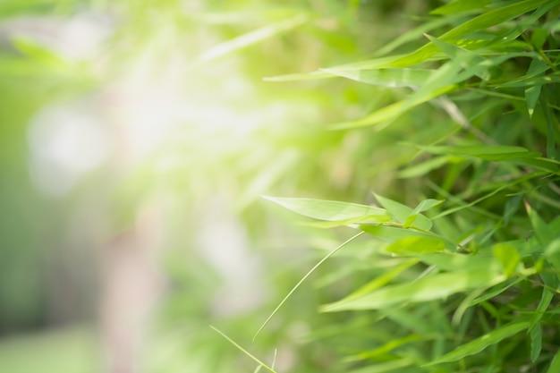 Bouchent la belle vue de la nature verte laisse sur fond d'arbre de verdure floue avec la lumière du soleil Photo Premium