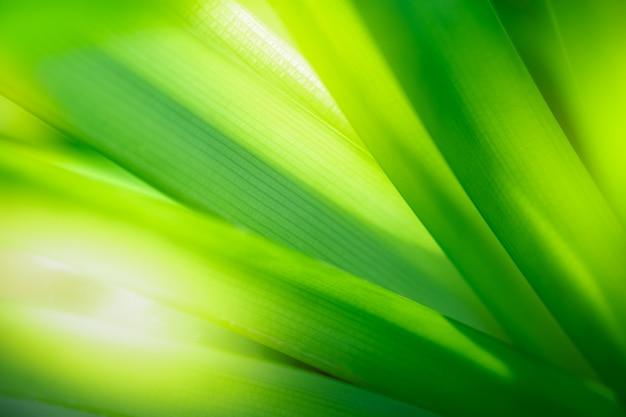 Bouchent la belle vue de la nature verte laisse sur fond d'arbre de verdure floue Photo Premium