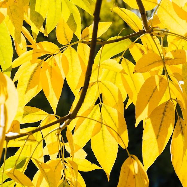 Bouchent les feuilles d'automne jaunes Photo gratuit