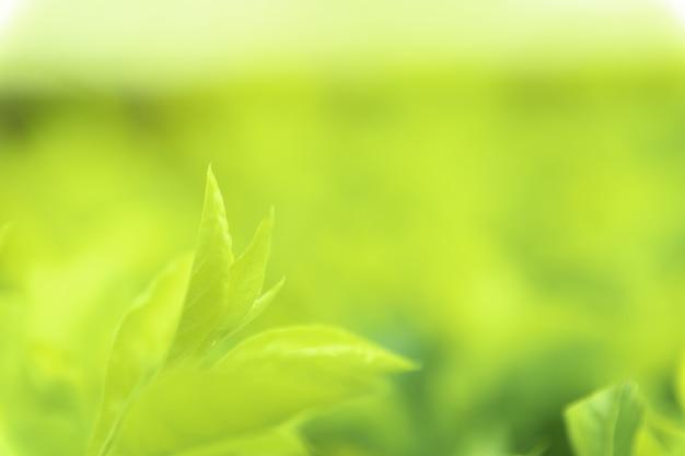 Bouchent les feuilles vertes de vue texture verte nature floue fond dans un parc, jardin ou forêt. utilisez-le pour écrire ou copier dans un espace vide sur un fond de nature verdoyante. Photo Premium