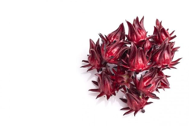 Bouchent roselle rouge coup de studio isolé sur blanc Photo Premium