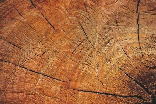 Bouchent la texture du bois de coupe par la scie à chaîne. campagne conceptuelle sur le réchauffement climatique et la préservation des forêts. Photo Premium