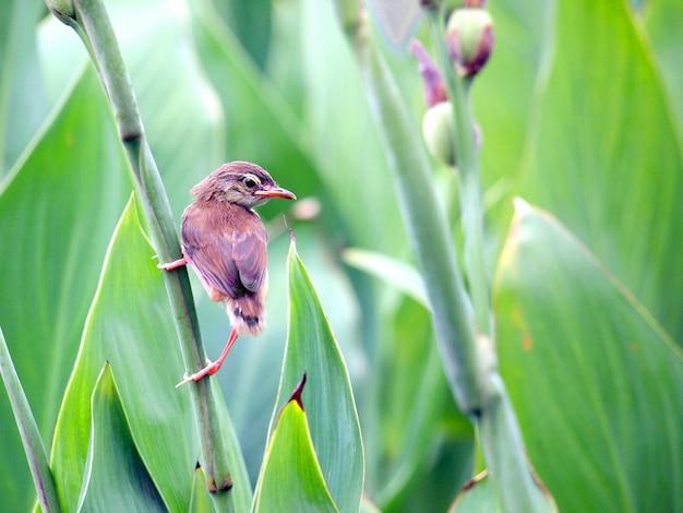 Bouchent La Vue Du Joli Petit Oiseau Photo Premium