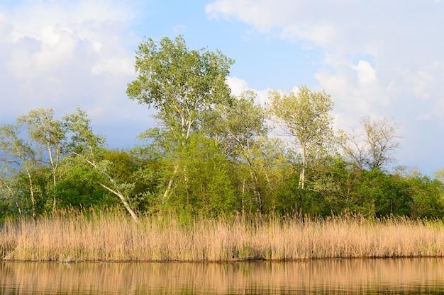 Bouleaux Et Roseaux Près D'un Lac Photo Premium