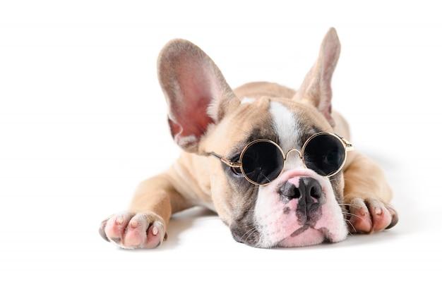 Bouledogue français mignon lunettes de soleil et dormir Photo Premium