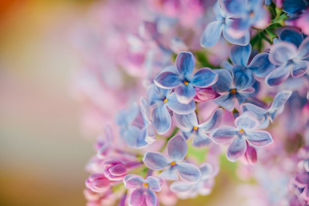 Bouquet De Branches Lilas En Fleurs Sur Fond Abstrait Photo Premium
