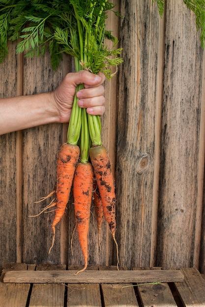 Bouquet de carottes fraîches à la main Photo Premium
