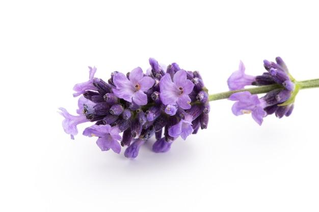 Bouquet De Fleurs De Lavande Attaché Isolé Sur Une Surface Blanche. Photo Premium
