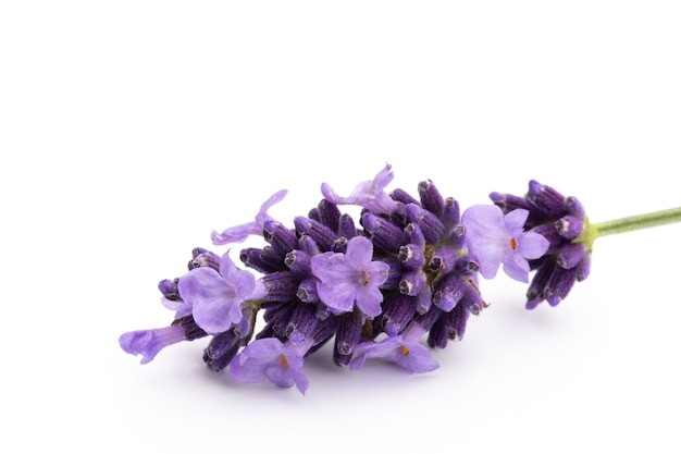 Bouquet De Fleurs De Lavande Attaché Isolé Photo Premium