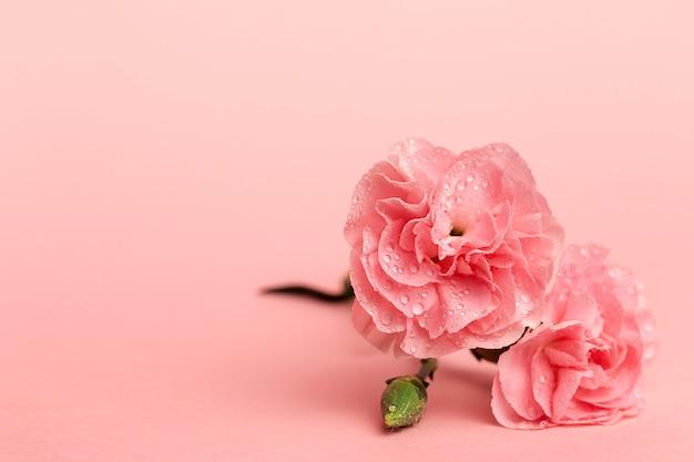 Bouquet de fleurs d'oeillets roses Photo Premium